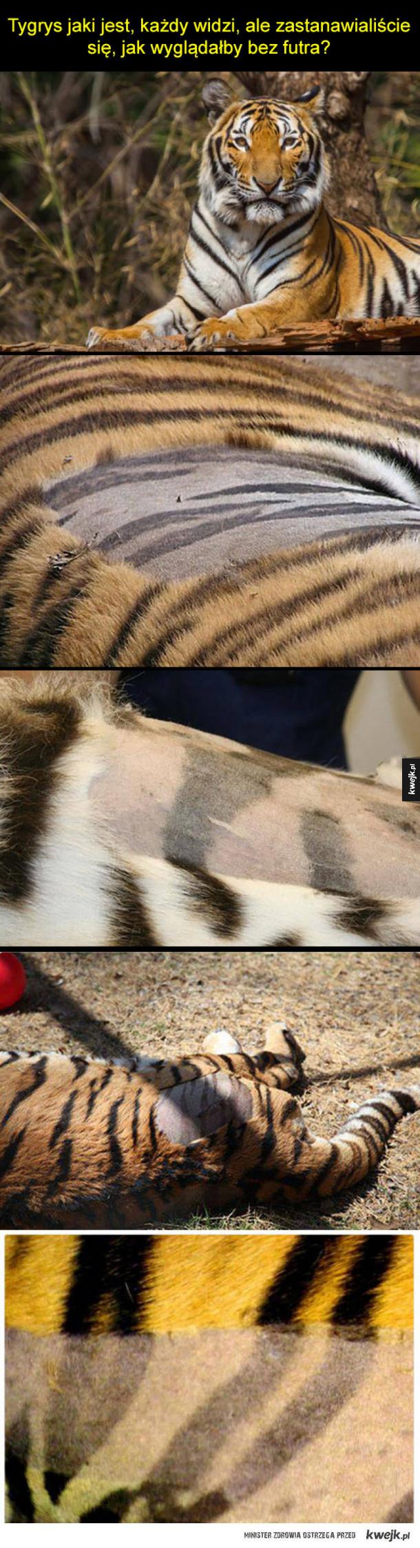Jak wygląda tygrysia skóra