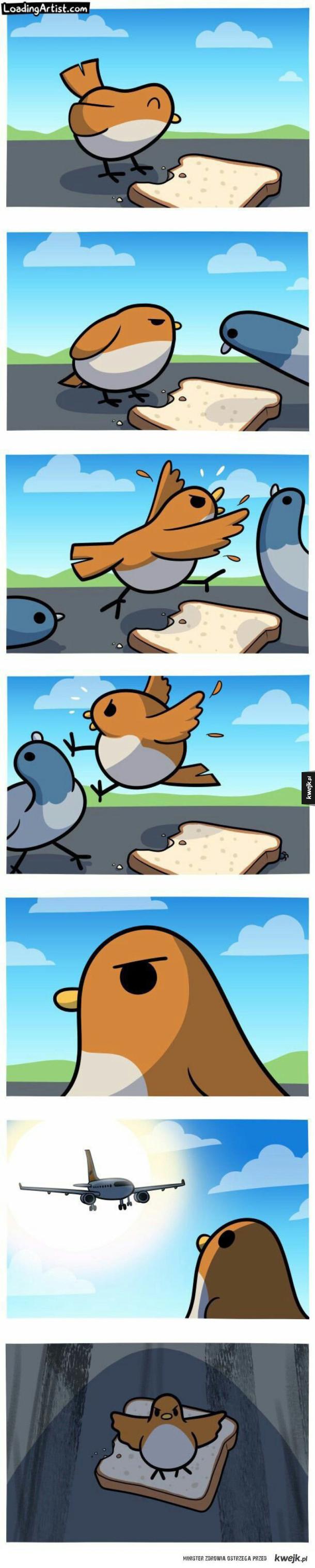Chlebek