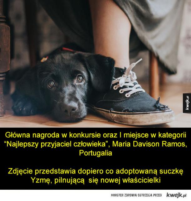 """Zdjęcia z konkursu na """"Psiego Fotografa Roku"""""""