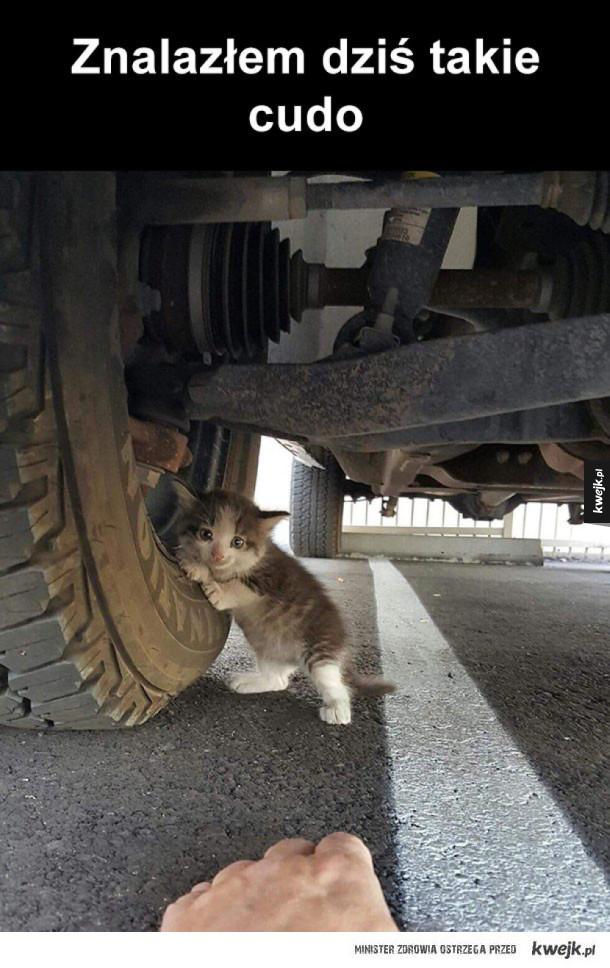 jaki śliczny kotek