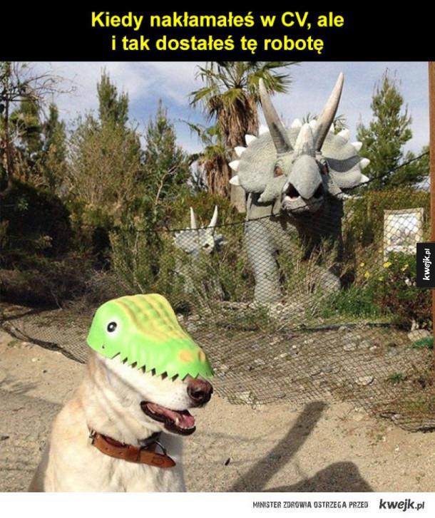 Psie śmieszki z okazji Dnia Psa