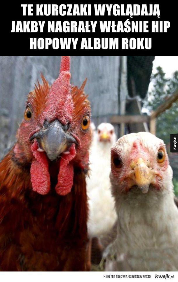 gangsta kurczaki