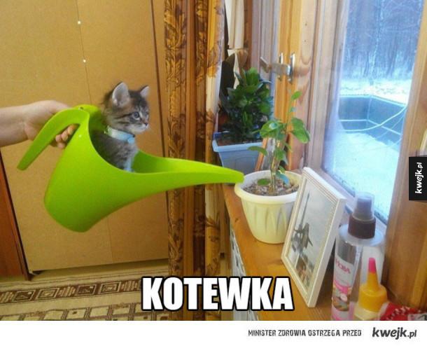 Kotewka