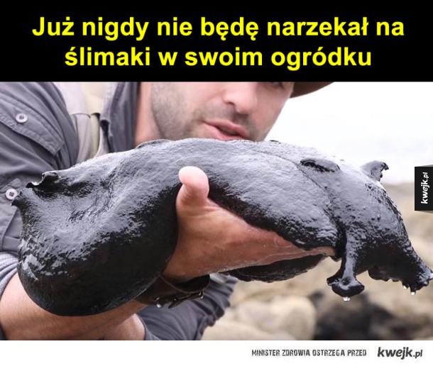 Wielki ślimak