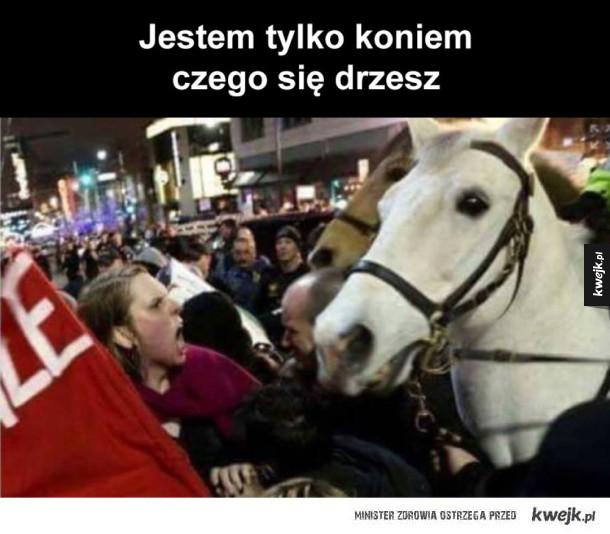 nie krzycz na konia