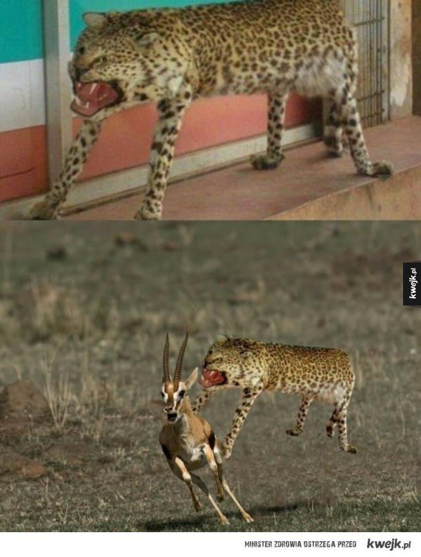 mordercze zwierze