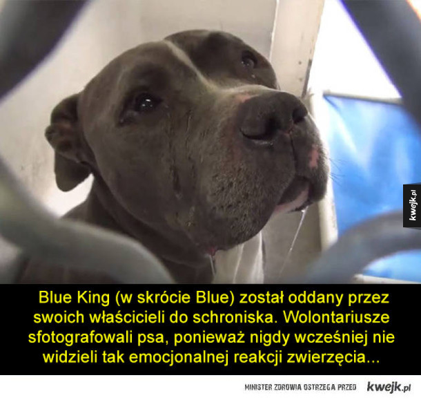Historia porzuconego psa (z happy endem)