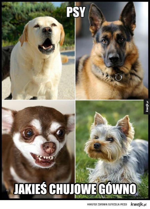 prawdziwe psy