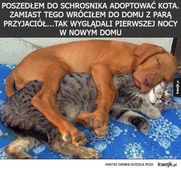 Przyjaźń ponad wszystko