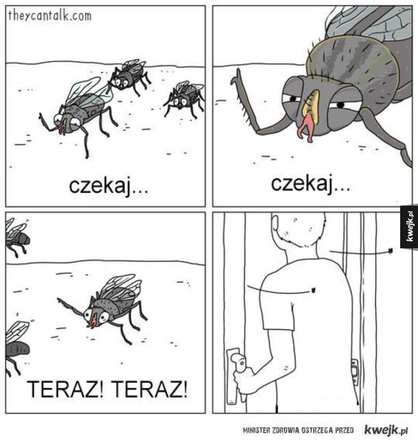 Typowe muchy