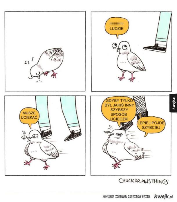 Gołębie takie są