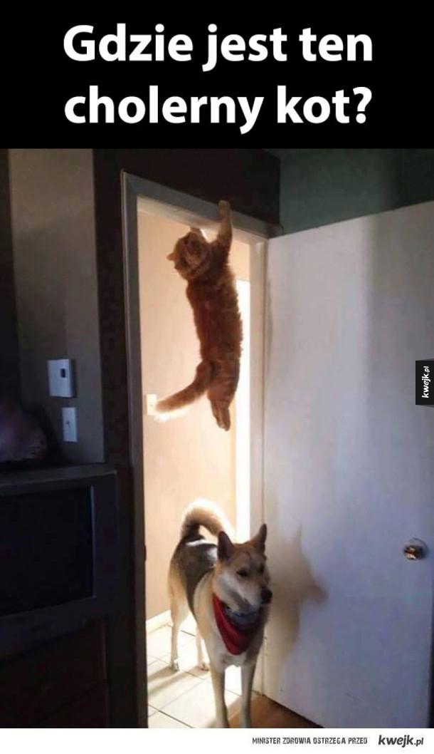 widział ktoś kota?