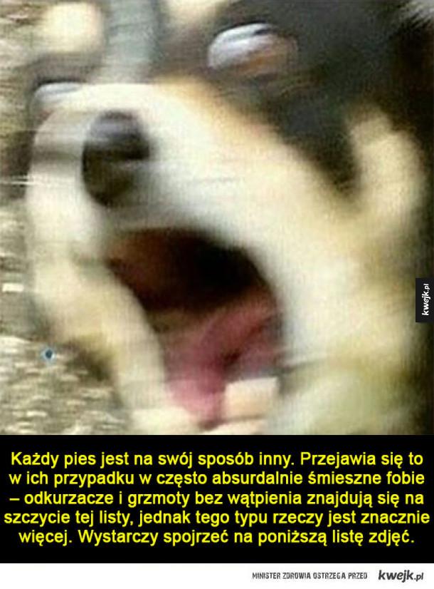 Psy i ich absurdalne fobie
