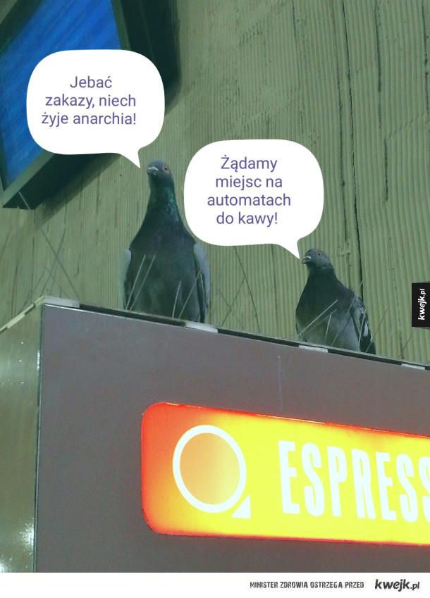 Gołębia rewolucja