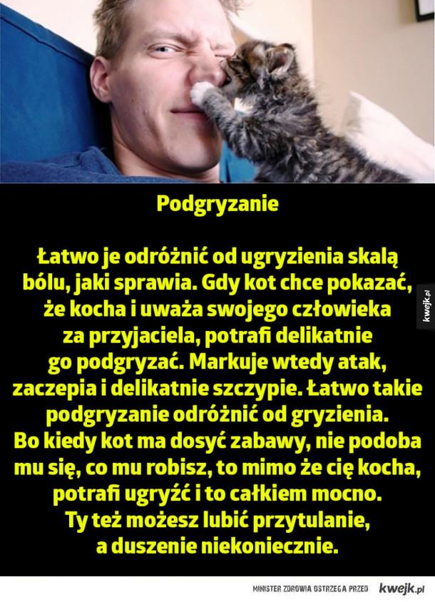 Znaki, które koty wysyłają, a które znaczą, że twój kot cię kocha i ma za przyjaciela - Podgryzanie  Łatwo je odróżnić od ugryzienia skalą  bólu, jaki sprawia. Gdy kot chce pokazać,  że kocha i uważa swojego człowieka  za przyjaciela, potrafi delikatnie  go podgryzać. Markuje wtedy atak,  zaczepia i delikatnie szczypie. Łatwo takie podgryzani
