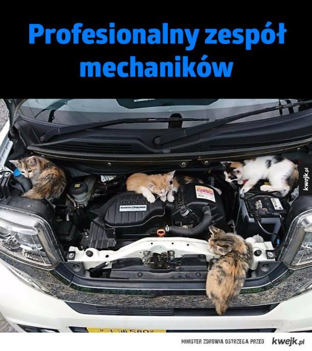 Profesionalny zakład