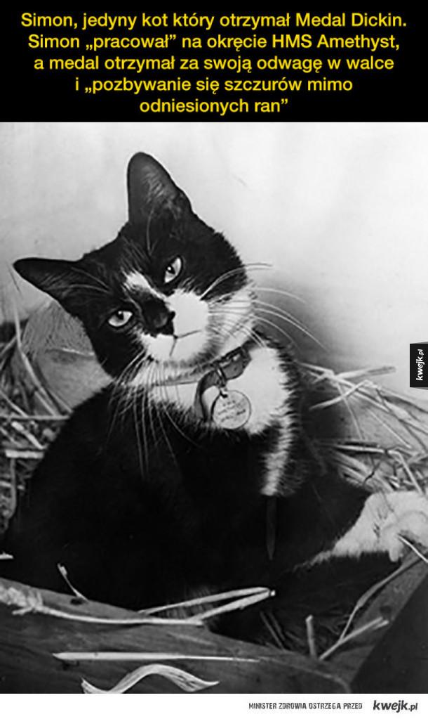 Koty wojny na starych fotografiach