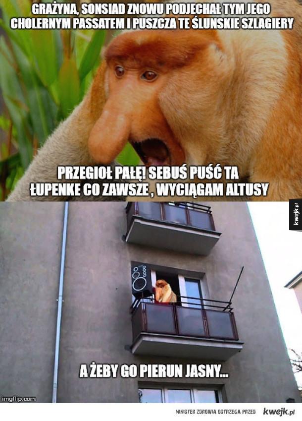 Memy O Januszach Czyli Zachowania I Teksty Z Którymi Spotkał Się
