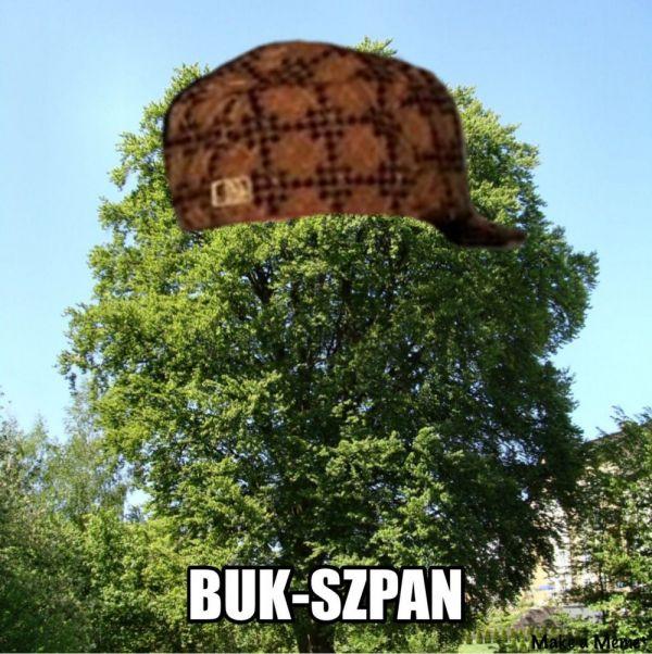 Drzewo-lans