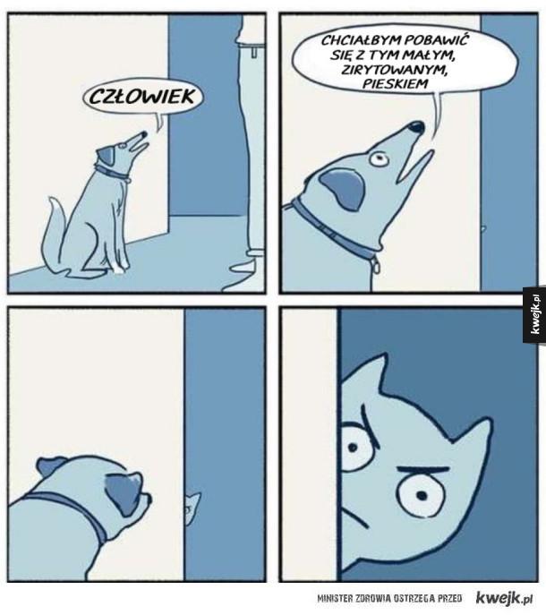 Naburmuszony mały pies