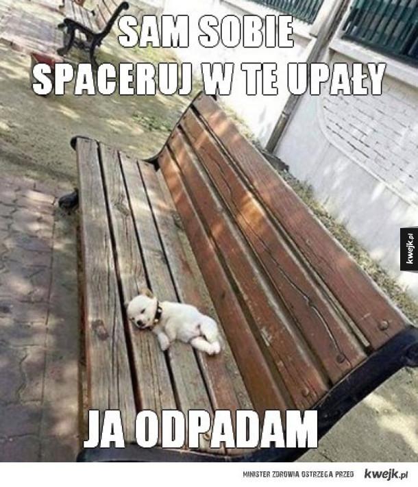 zostaw biednego piesa