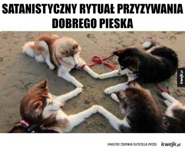 Psi rytuał