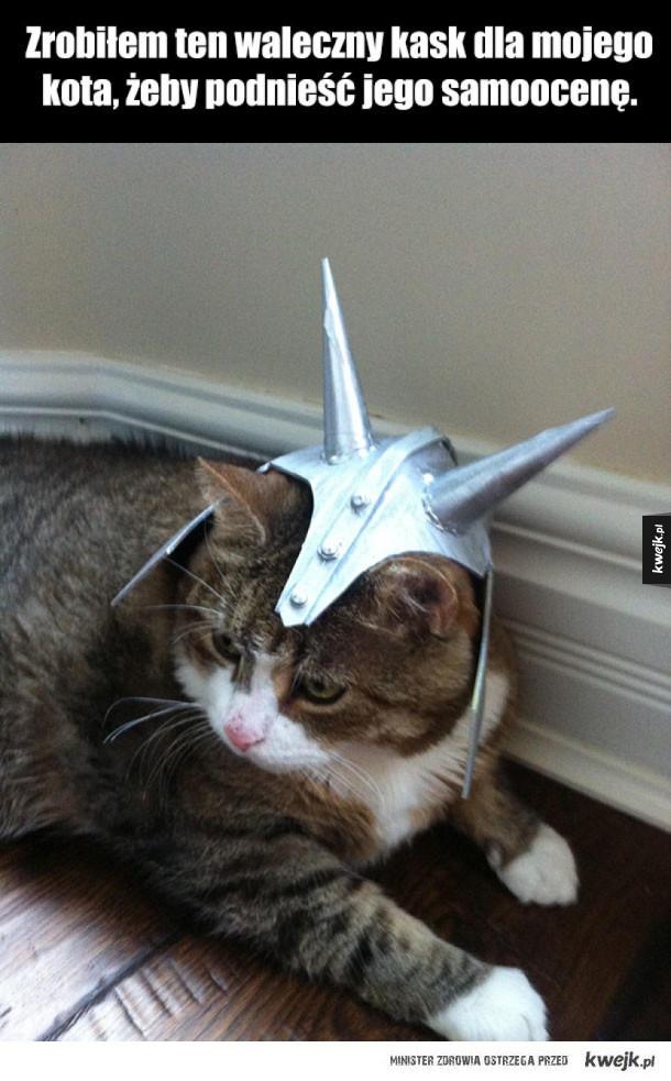 kask dla kota