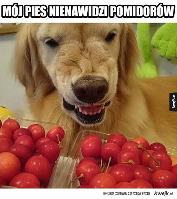Nienawiść do pomidorów