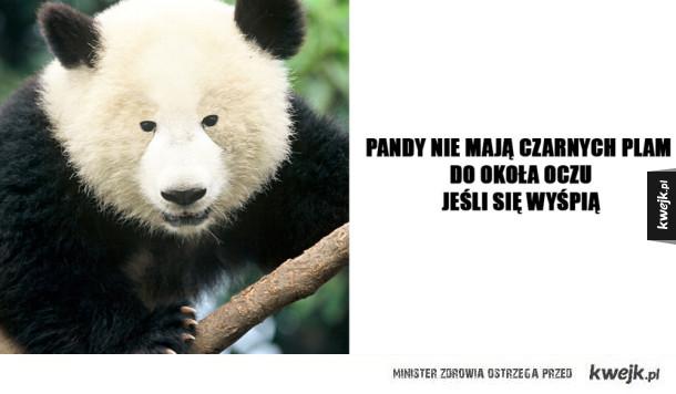 Prawda o pandach