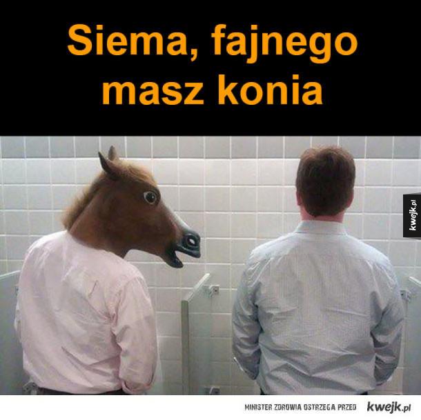 fajny koń