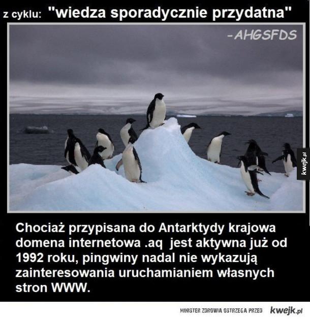 Domena antarktydy