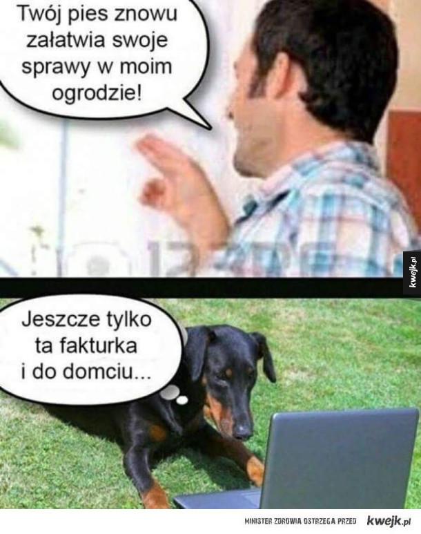Pies załatwia sprawy
