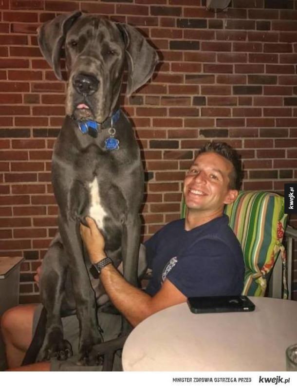 Psy, które zupełnie nie pojmują, że są już za duże na kolanka
