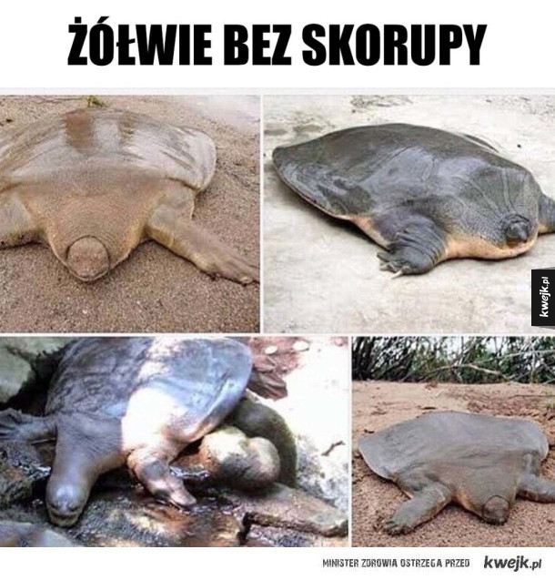 Dziwne te żółwie