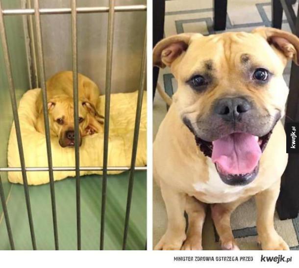Psy na zdjęciach przed i po adopcji