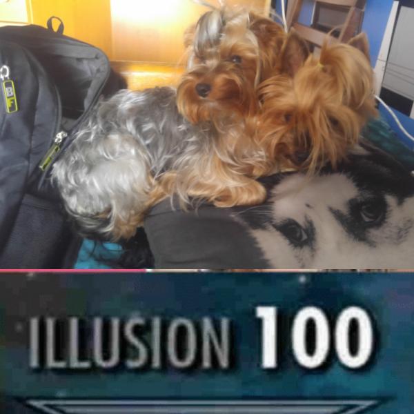 dwugłowy pies