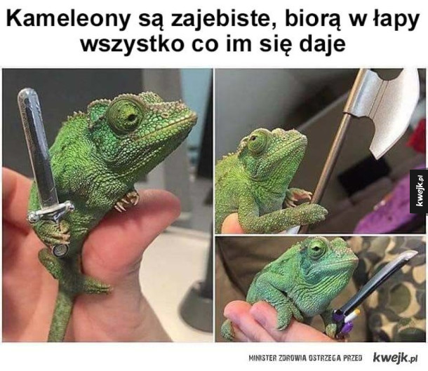 Kameleony to najlepsze zwierzęta