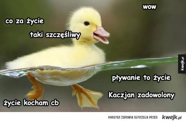 Kaczjanek