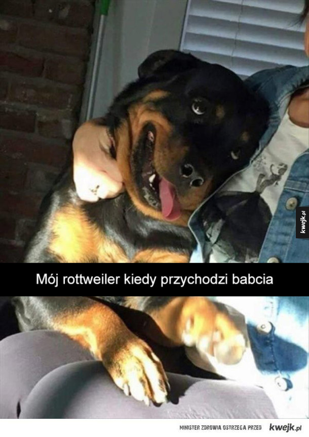 Psie śmieszki