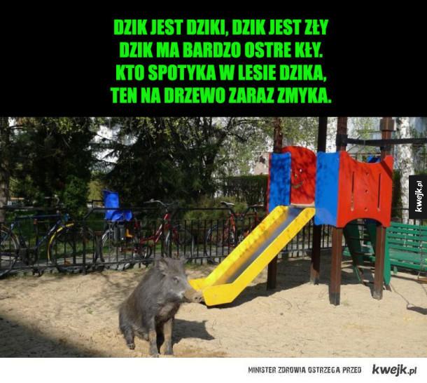 Dzik na placu zabaw w Warszawie
