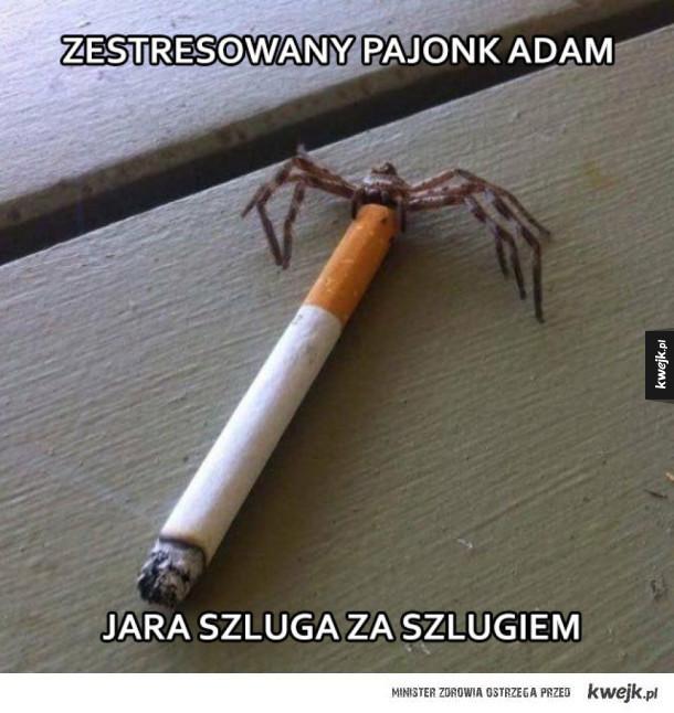 Adam nie pal
