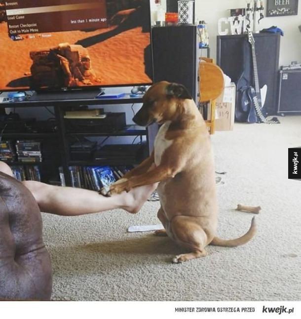 Psy, które robią dziwne rzeczy