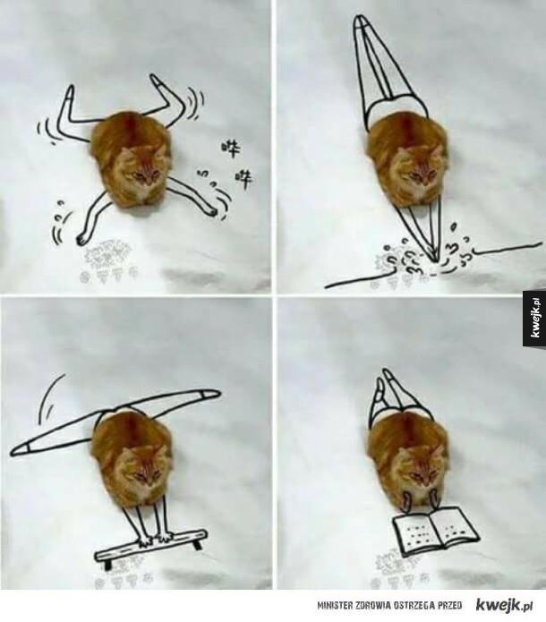 Żywot przeciętnego kota