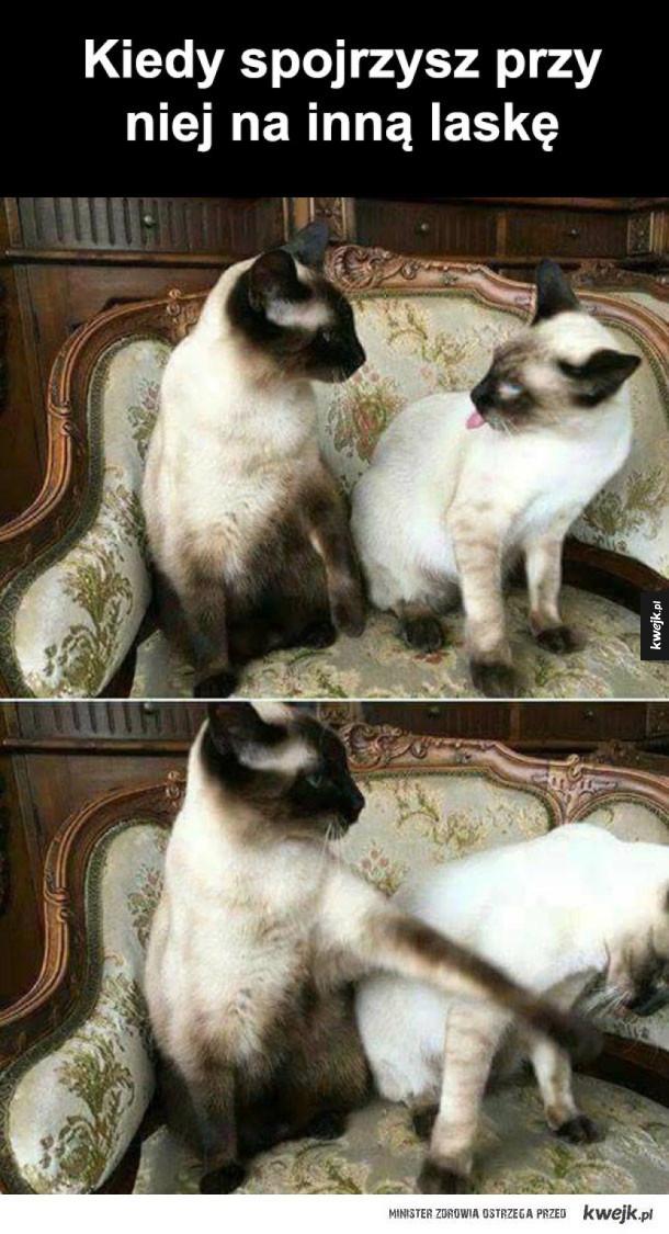 Inna kocica