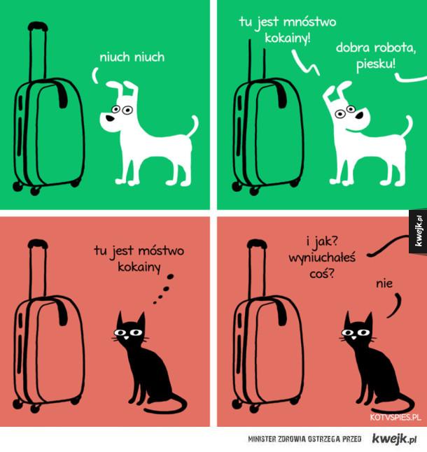 Gdyby koty wykrywały narkotyki