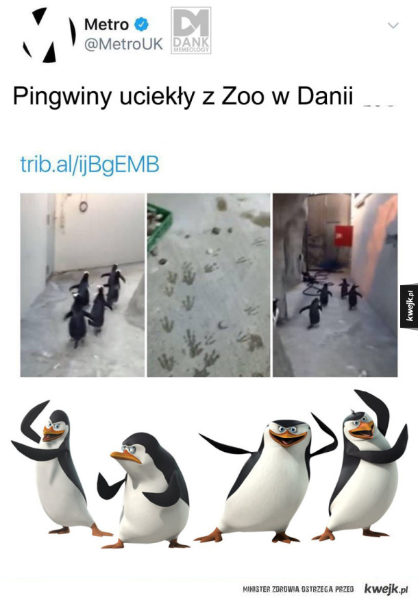 Pingwiny uciekiniery