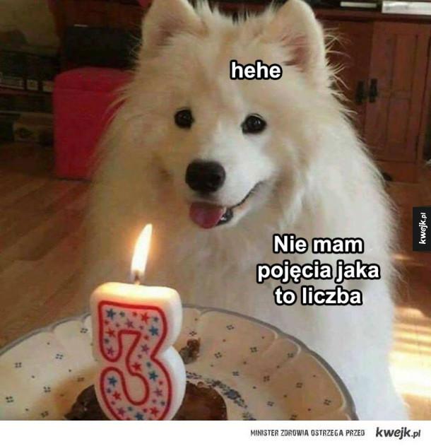 Urodzinowy piesek