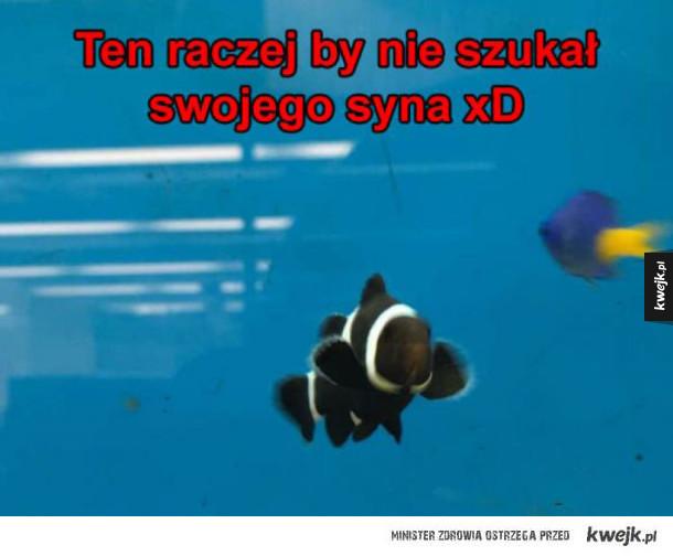 Czarna rybka