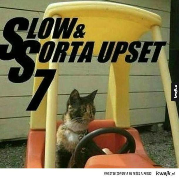 wściekły i szybki kot