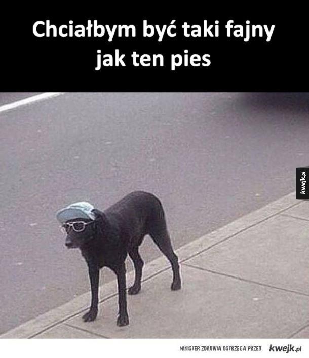 Fajny pies